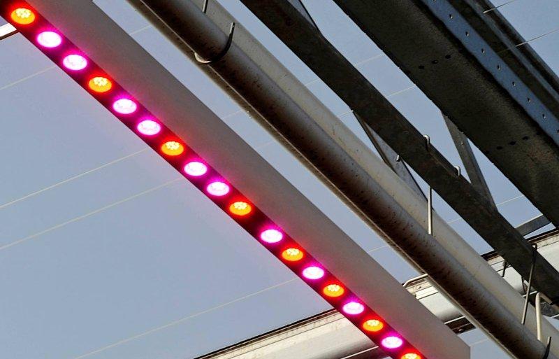 Ledlampen met 95 rood en 5 procent blauw licht.