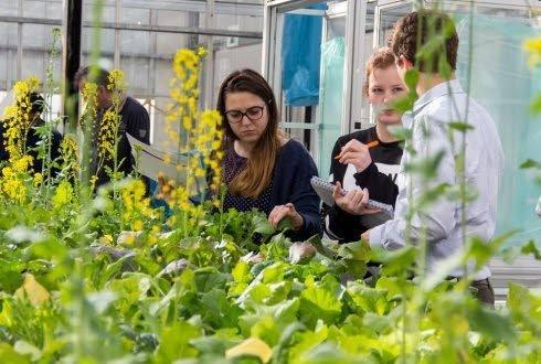Nieuw lesmateriaal over nieuwe plantenveredeling